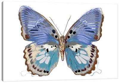 Golden Butterfly V Canvas Art Print