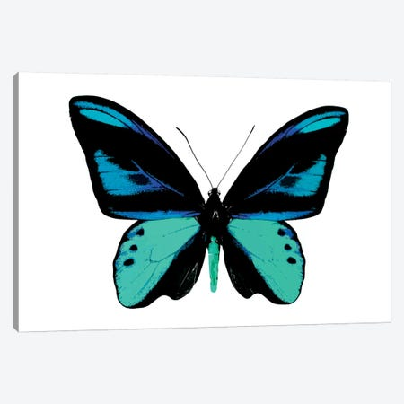 Vibrant Butterfly I Canvas Print #JUL47} by Julia Bosco Canvas Art