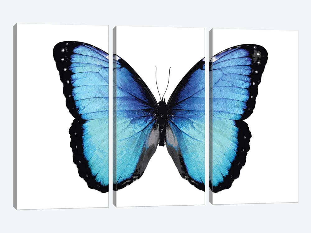 Vibrant Butterfly II 3-piece Canvas Art Print