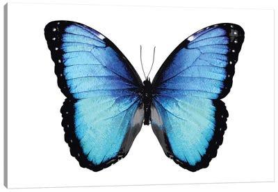 Vibrant Butterfly II Canvas Art Print