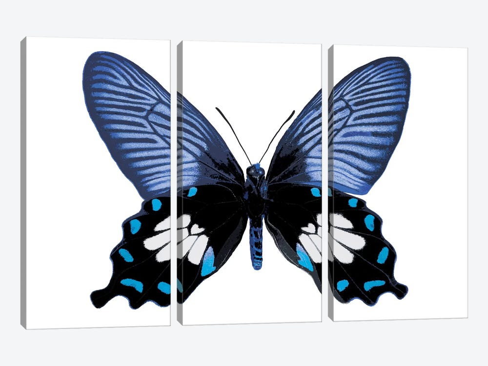 Vibrant Butterfly III by Julia Bosco 3-piece Canvas Artwork