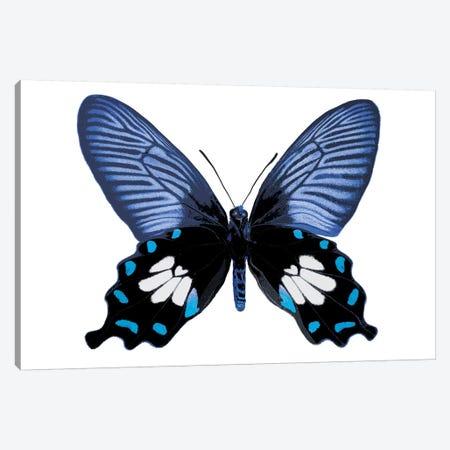 Vibrant Butterfly III Canvas Print #JUL49} by Julia Bosco Art Print