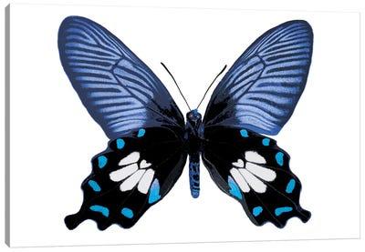 Vibrant Butterfly III Canvas Art Print