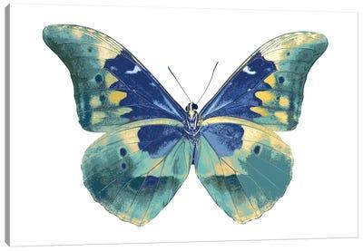 Butterfly In Aqua I Canvas Art Print