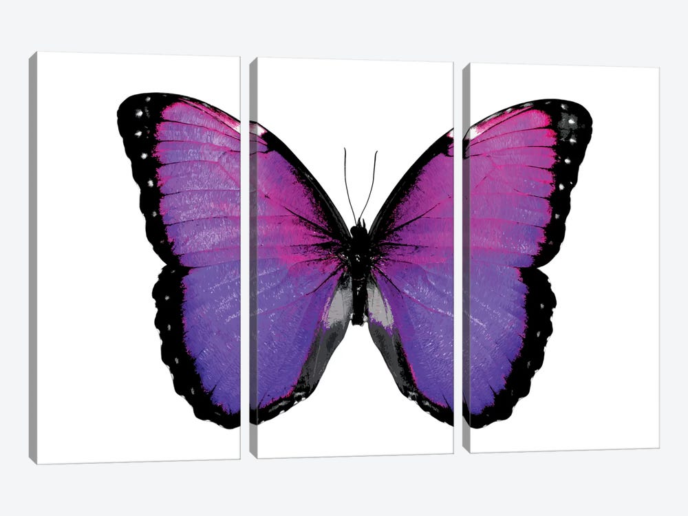 Vibrant Butterfly IV by Julia Bosco 3-piece Canvas Wall Art