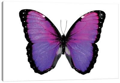 Vibrant Butterfly IV Canvas Art Print