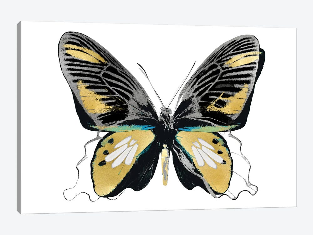 Vibrant Butterfly VI by Julia Bosco 1-piece Canvas Print