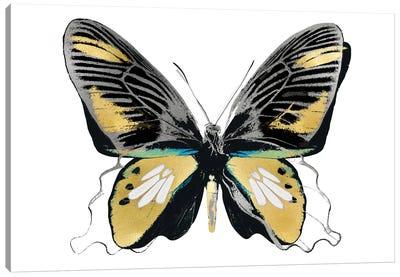 Vibrant Butterfly VI Canvas Art Print