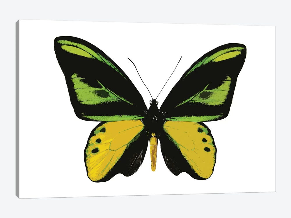 Vibrant Butterfly VII by Julia Bosco 1-piece Canvas Artwork