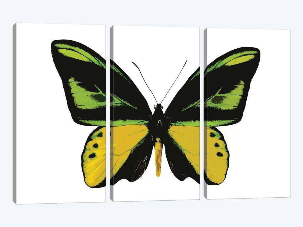 Vibrant Butterfly VII by Julia Bosco 3-piece Canvas Art