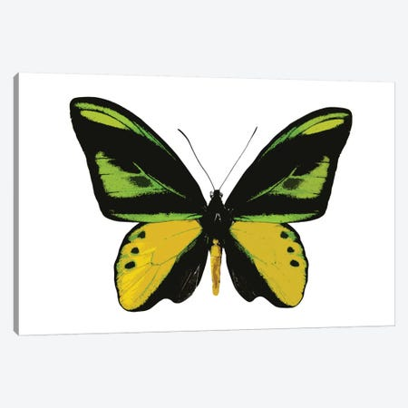 Vibrant Butterfly VII Canvas Print #JUL52} by Julia Bosco Canvas Wall Art
