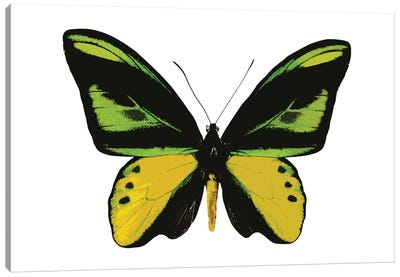 Vibrant Butterfly VII Canvas Art Print
