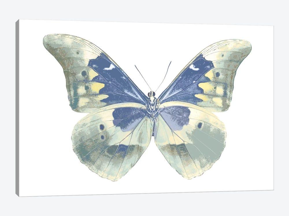 Butterfly In Aqua II by Julia Bosco 1-piece Canvas Wall Art