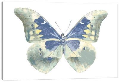 Butterfly In Aqua II Canvas Art Print
