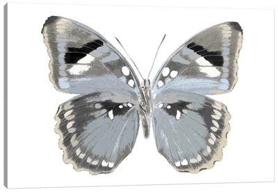 Butterfly In Grey I Canvas Art Print