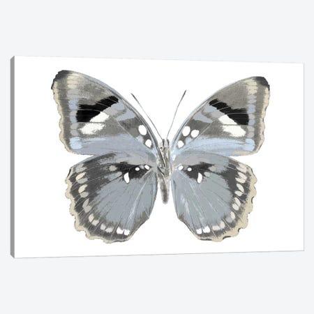 Butterfly In Grey I Canvas Print #JUL7} by Julia Bosco Canvas Print