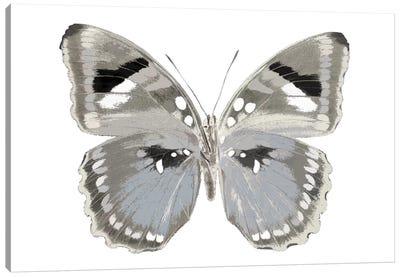 Butterfly In Grey II Canvas Art Print