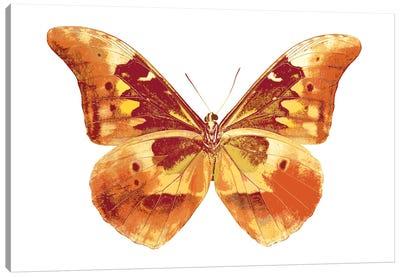 Butterfly In Grey III Canvas Art Print