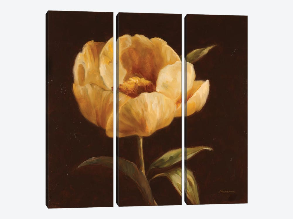 Floral Symposium I by Julianne Marcoux 3-piece Canvas Wall Art