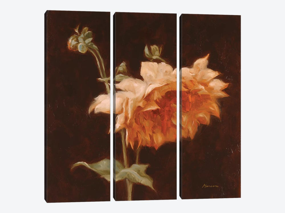Floral Symposium III by Julianne Marcoux 3-piece Canvas Wall Art