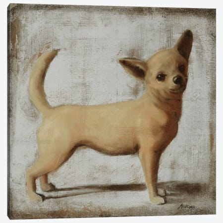 Chihuahua Canvas Print #JUM26} by Julianne Marcoux Canvas Art Print