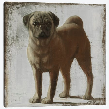 Pug Canvas Print #JUM29} by Julianne Marcoux Canvas Artwork