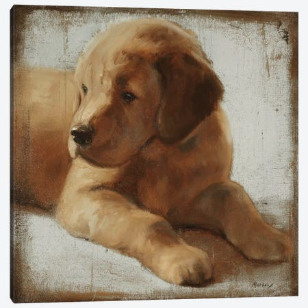 Retriever Canvas Print #JUM30} by Julianne Marcoux Canvas Art Print