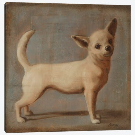 Chihuahua II Canvas Print #JUM31} by Julianne Marcoux Canvas Art Print