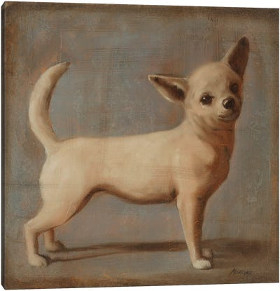 Chihuahua II Canvas Art Print