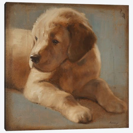 Retriever II Canvas Print #JUM34} by Julianne Marcoux Canvas Art