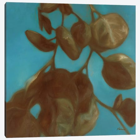 Eucalyptus II Canvas Print #JUM3} by Julianne Marcoux Canvas Art Print