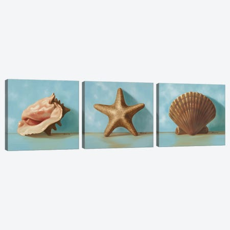 Shells Triptych Canvas Print Set #JUM3HSET001} by Julianne Marcoux Canvas Wall Art