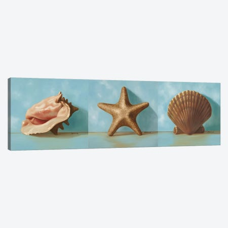 Shells Triptych Canvas Print Set #JUM3HSET001} by Julianne Marcoux Canvas Wall Art