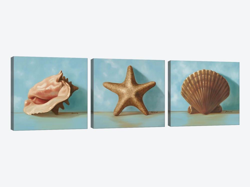 Shells Triptych by Julianne Marcoux 3-piece Canvas Print