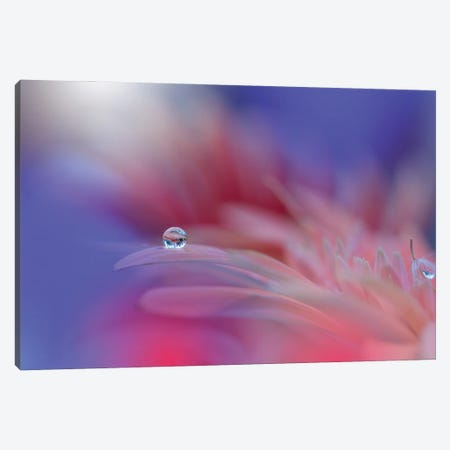 Colorful Explosion... Canvas Print #JUN6} by Juliana Nan Canvas Print