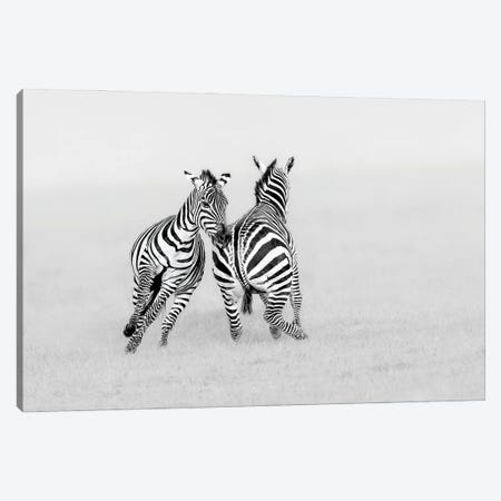 Playing Or Fighting? Canvas Print #JUZ12} by Jun Zuo Canvas Art