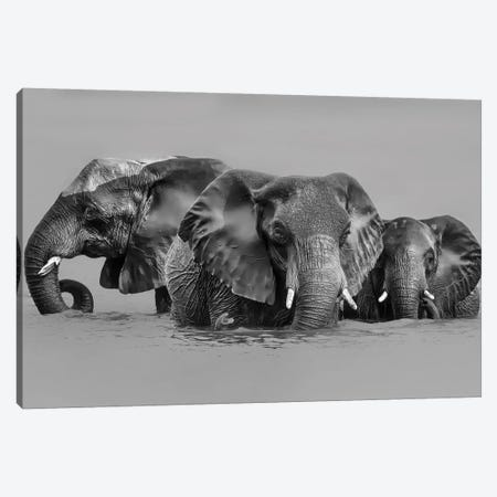 Elephant Crossing The River Canvas Print #JUZ4} by Jun Zuo Canvas Wall Art