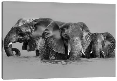 Elephant Crossing The River Canvas Art Print