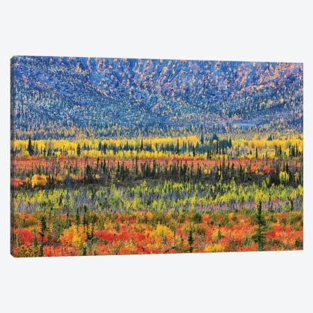 Fall Color In The Mountain Canvas Print #JUZ8} by Jun Zuo Canvas Art Print