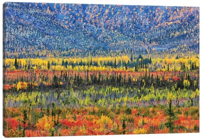 Fall Color In The Mountain Canvas Art Print