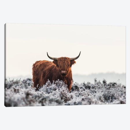 Highlander Canvas Print #JVD1} by Jaap Van Den Canvas Art Print