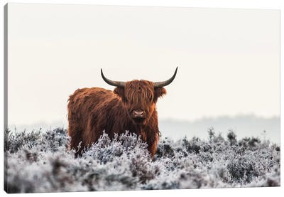 Highlander Canvas Art Print