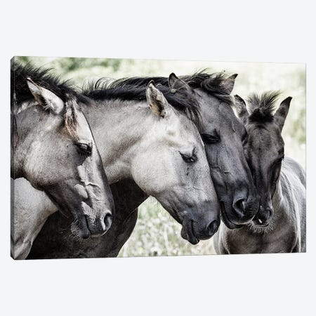 Four Konik Horses Canvas Print #JVD2} by Jaap Van Den Art Print