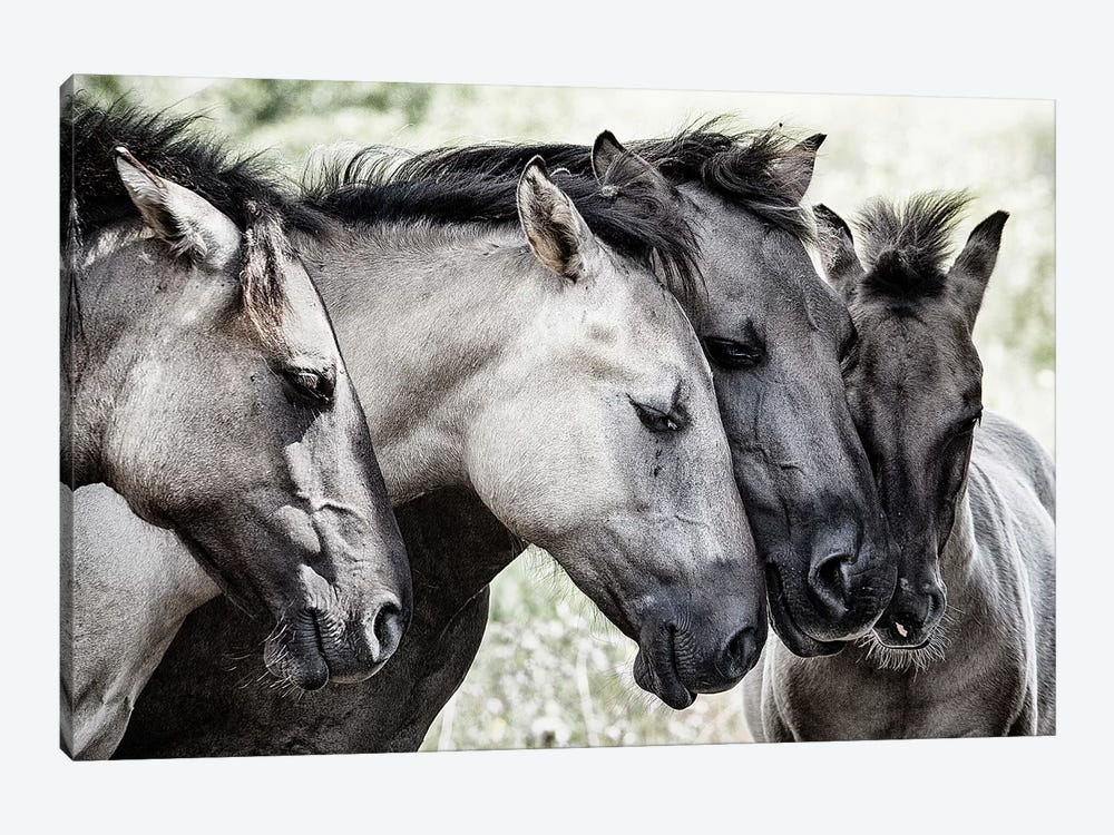 Four Konik Horses by Jaap Van Den 1-piece Canvas Print