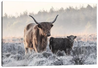 Highlander And Calf Canvas Art Print