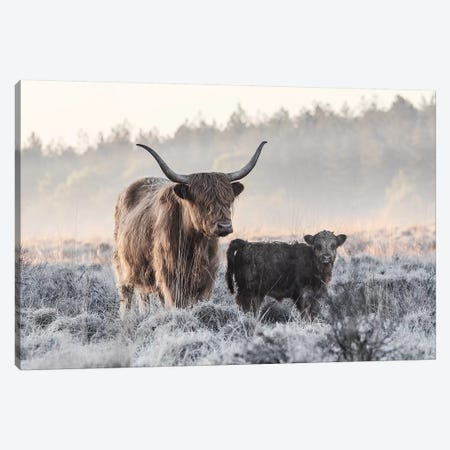 Highlander And Calf Canvas Print #JVD4} by Jaap Van Den Canvas Artwork