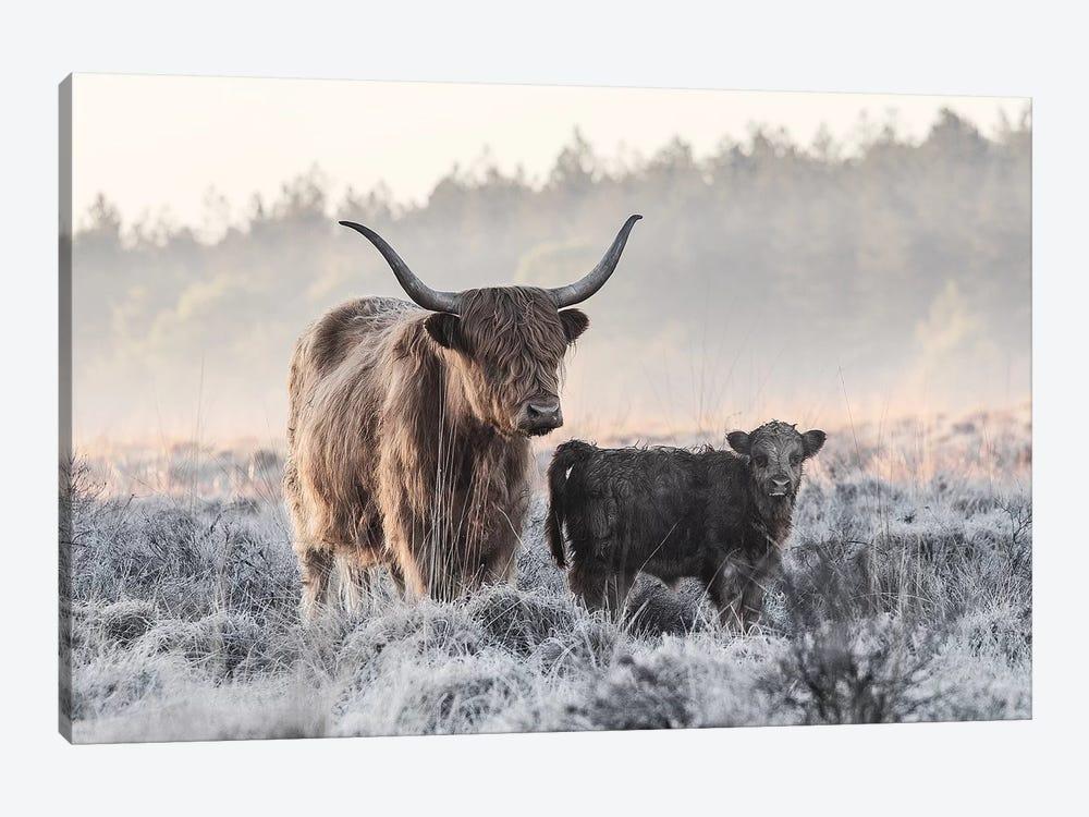 Highlander And Calf by Jaap Van Den 1-piece Canvas Print