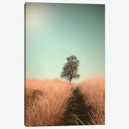 Grass And Path Canvas Print #JVD6} by Jaap Van Den Canvas Artwork