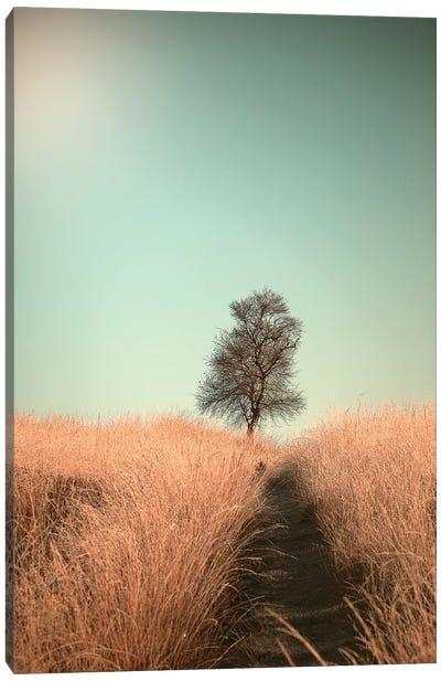 Grass And Path Canvas Art Print