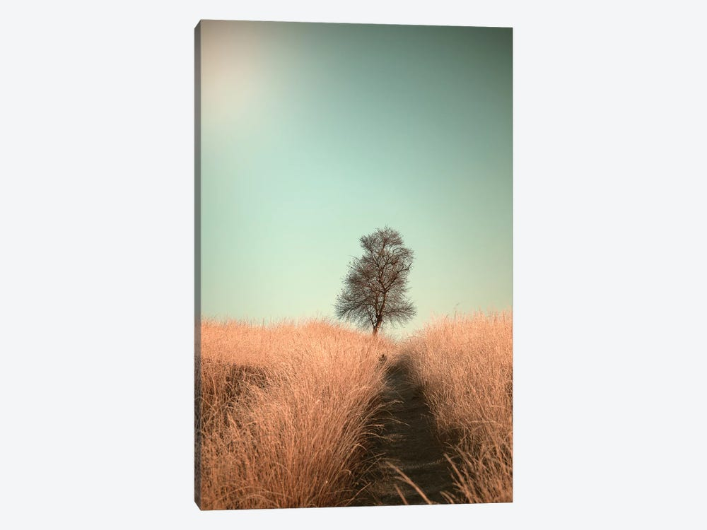 Grass And Path by Jaap Van Den 1-piece Canvas Print